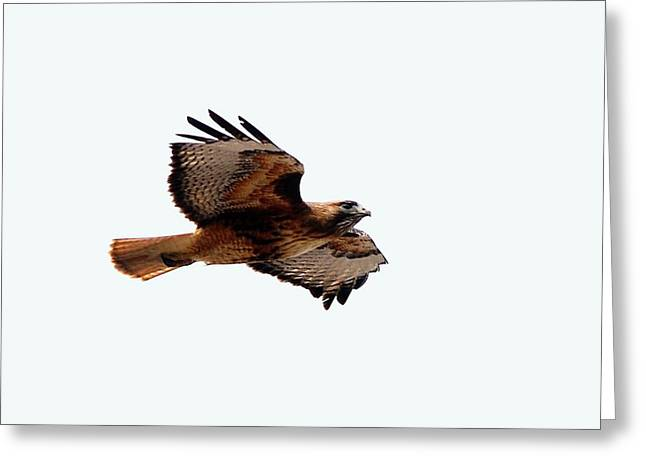 West Fork Digital Greeting Cards - Wings wide open Greeting Card by Don Mann