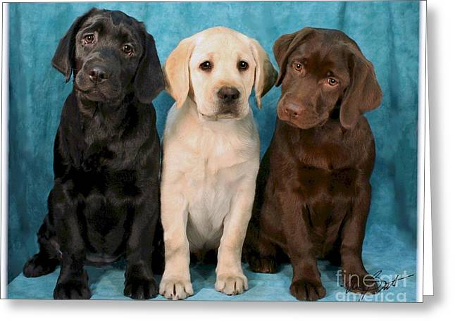 Winkin Blinkin And Nod  Lab Puppies Greeting Card by Maxine Bochnia
