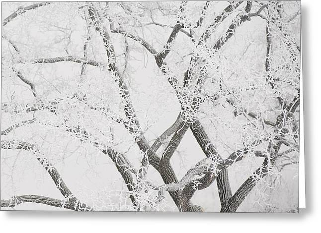 Overcast Day Greeting Cards - Winnipeg, Manitoba, Canada Tree Greeting Card by Keith Levit