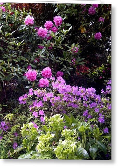 Rhodendron Greeting Cards - Winter and Spring Flowers Greeting Card by Sandra Maddox