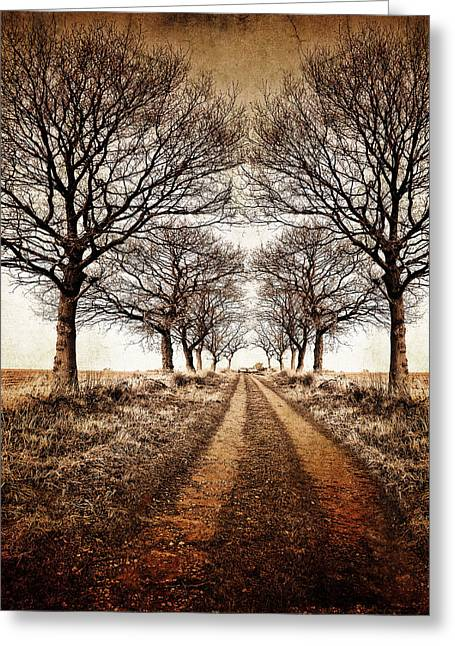 Vanishing Greeting Cards - Winter Avenue Greeting Card by Meirion Matthias