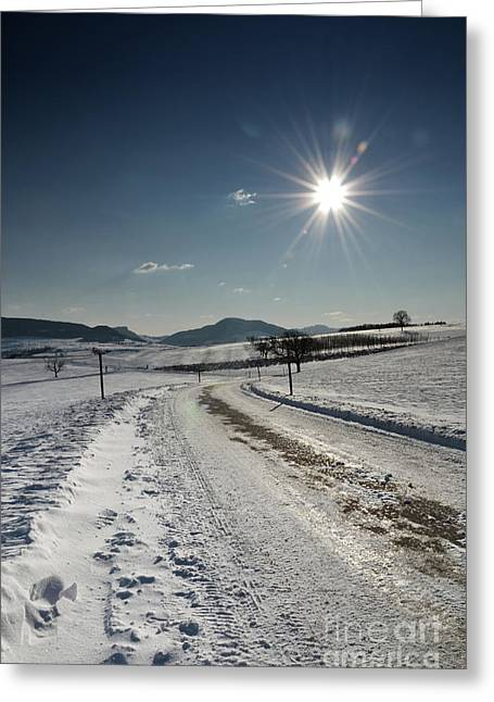 Coldly Greeting Cards - Winter Beauty 1 Greeting Card by Bruno Santoro