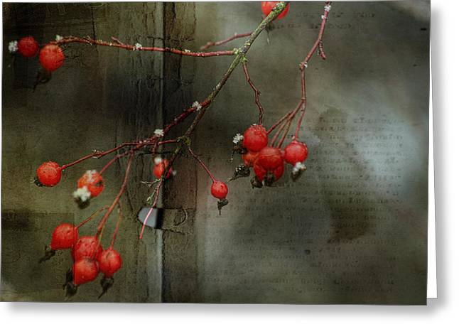 Winter Photos Mixed Media Greeting Cards - Winter Berries Greeting Card by Bonnie Bruno