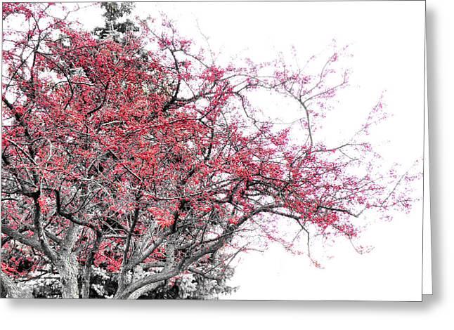 Black Berries Greeting Cards - Winter Berries Greeting Card by Scott Hovind