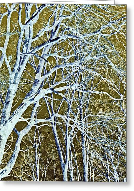 Susan Leggett Greeting Cards - Winter Blues Greeting Card by Susan Leggett