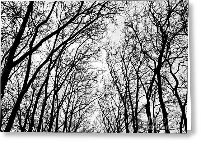 Nabucodonosor Perez Greeting Cards - Winter Branches - I Greeting Card by Nabucodonosor Perez