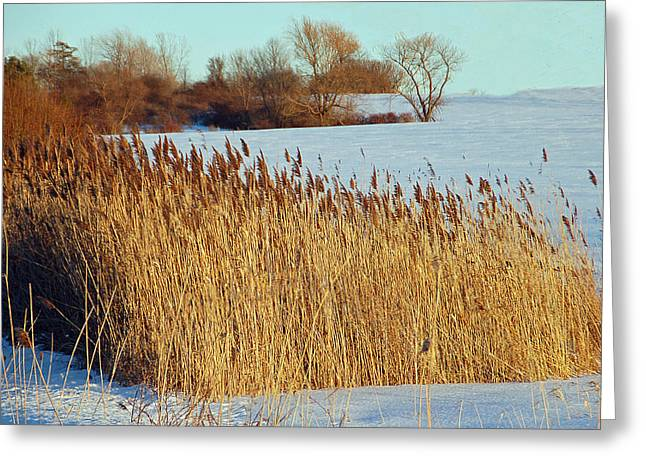 Winter Breeze Greeting Card by Aimee L Maher Photography and Art