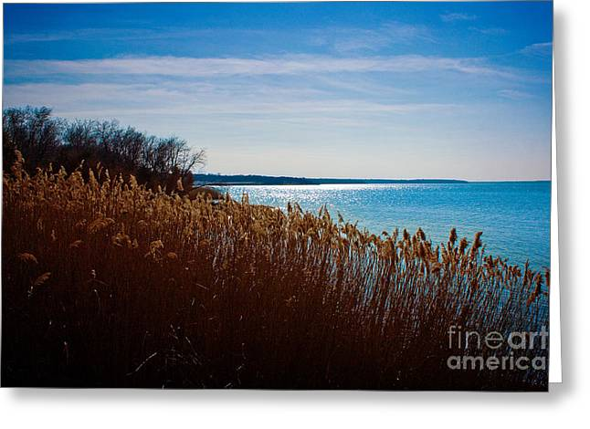 Winter Breeze Greeting Card by Lisa Holmgreen