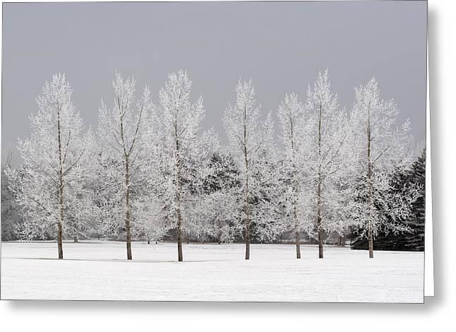 Winter, Calgary, Alberta, Canada Greeting Card by Michael Interisano