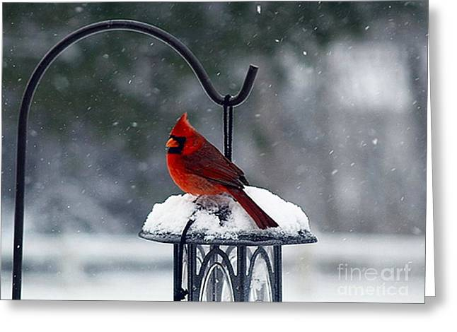 Storm Prints Digital Art Greeting Cards - Winter Cardinal Greeting Card by Vera Bullock