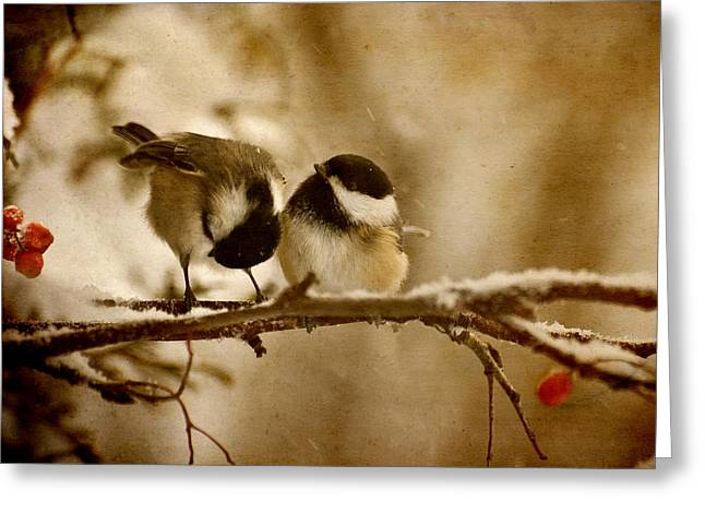 Humorous Greeting Cards Greeting Cards - Winter Chickadees. Greeting Card by Kelly Nelson