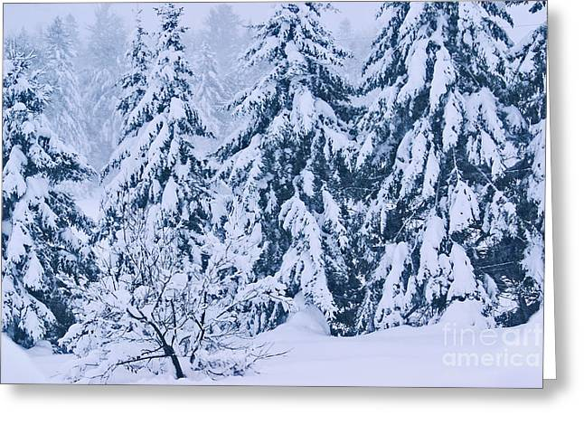 Snow Tree Prints Greeting Cards - Winter Coat Greeting Card by Aimelle