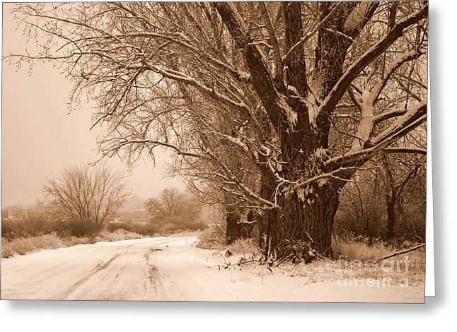 Winter Roads Greeting Cards - Winter Country Road Greeting Card by Carol Groenen