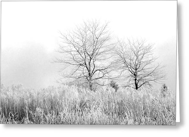 Winter Day Greeting Card by Julie Palencia