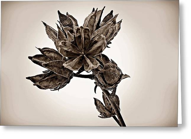 Rose Of Sharon Greeting Cards - Winter Dormant Rose of Sharon - S Greeting Card by David Dehner