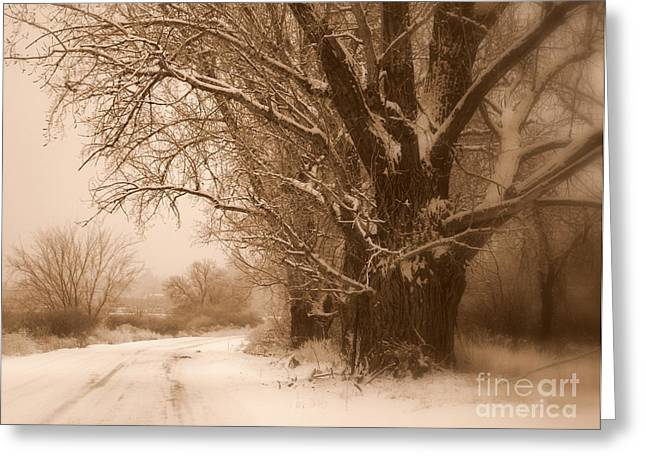 Country Lanes Digital Art Greeting Cards - Winter Dream Greeting Card by Carol Groenen