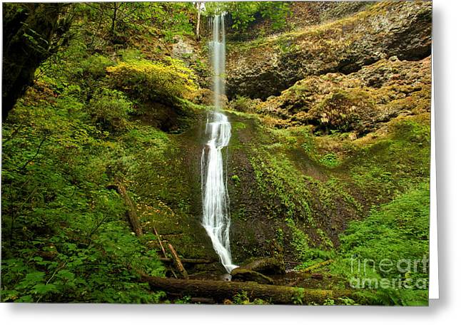 State Parks In Oregon Greeting Cards - Winter Falls Greeting Card by Adam Jewell