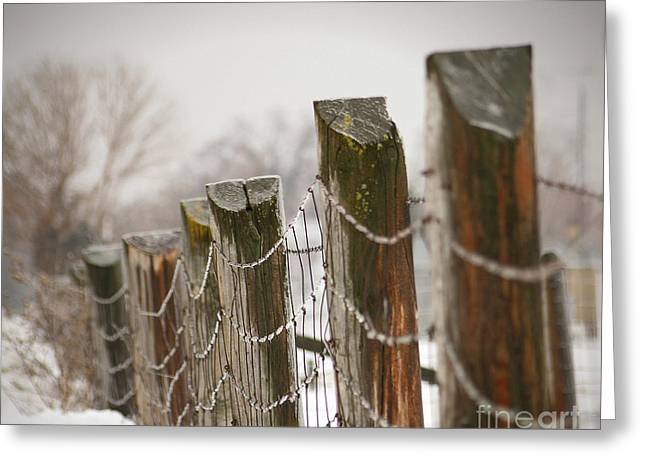 Barriers Greeting Cards - Winter fence Greeting Card by Sandra Cunningham