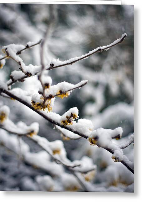 Winter Fleurs Greeting Card by Mike Reid