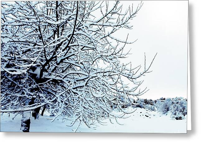 Snowy Day Greeting Cards - Winter forest Greeting Card by Anna Omelchenko