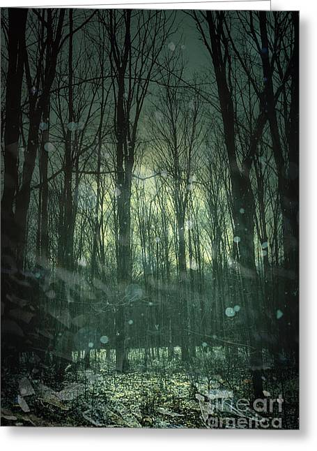 Winter Forest At Twilight Greeting Card by Sandra Cunningham