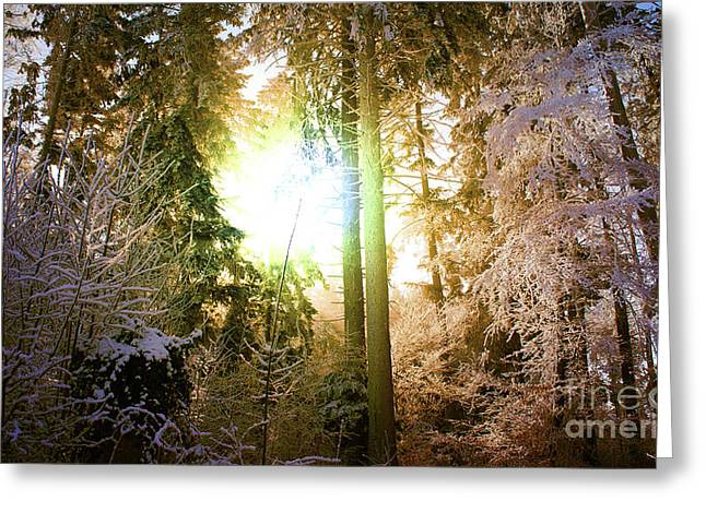 Coldly Greeting Cards - Winter Forest Greeting Card by Bruno Santoro
