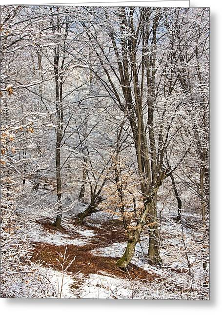 Snowy Day Greeting Cards - Winter forest Greeting Card by Gabriela Insuratelu