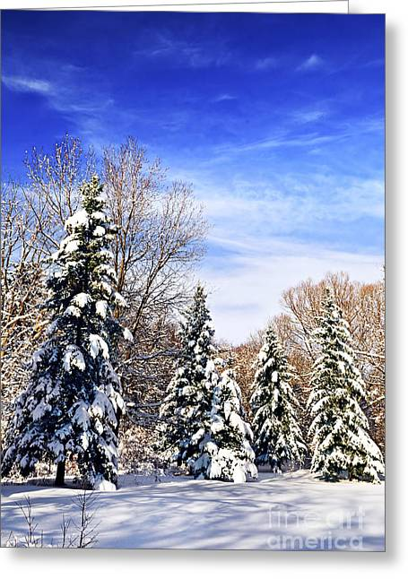 Winter Park Greeting Cards - Winter forest under snow Greeting Card by Elena Elisseeva