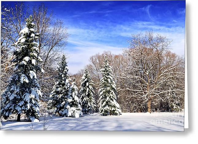 Winter Park Greeting Cards - Winter forest with snow Greeting Card by Elena Elisseeva