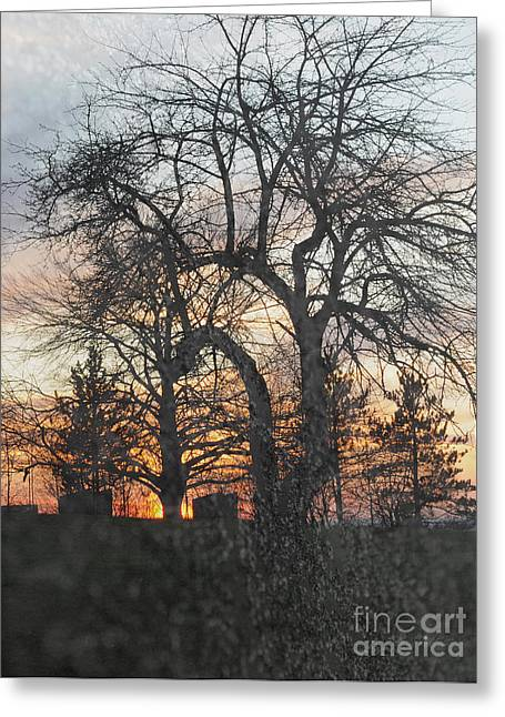 Lawns Fields Greeting Cards - Winter Freeze Greeting Card by Luke Moore
