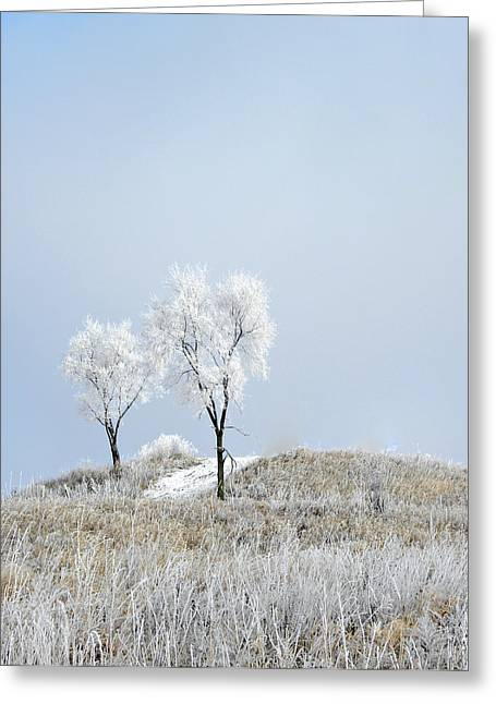 Snow-covered Landscape Greeting Cards - Winter Frost Greeting Card by Julie Palencia