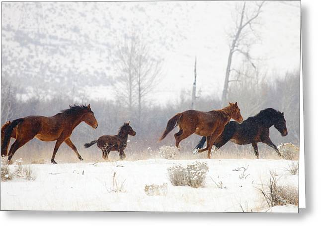 Mustangs Greeting Cards - Winter Gallop Greeting Card by Mike  Dawson