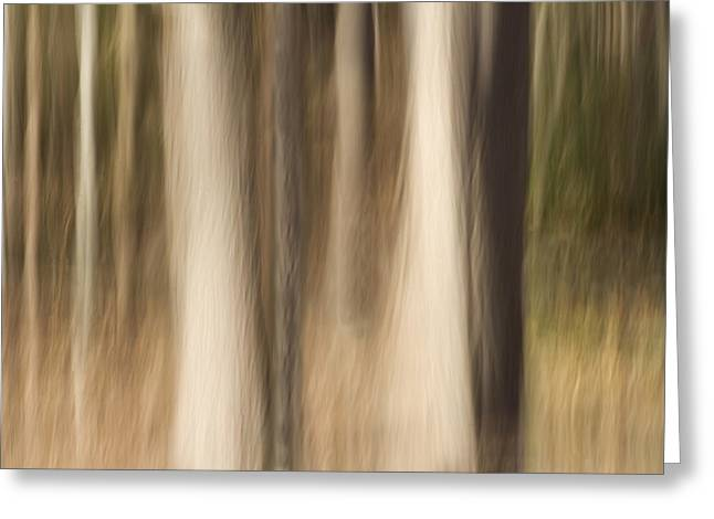 Gaia Greeting Cards - Winter Grove Greeting Card by Margaret Denny