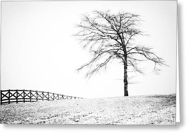 Winter in Black and White Greeting Card by David Waldrop
