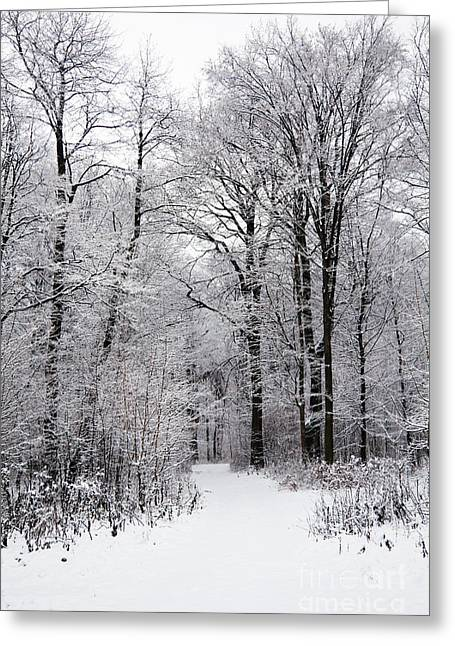 Snowy Day Greeting Cards - Winter in the forest Greeting Card by Gabriela Insuratelu