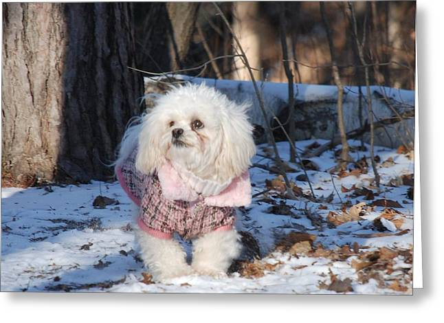 Dog At Play Print Greeting Cards - Winter in the North Greeting Card by Lisa  DiFruscio