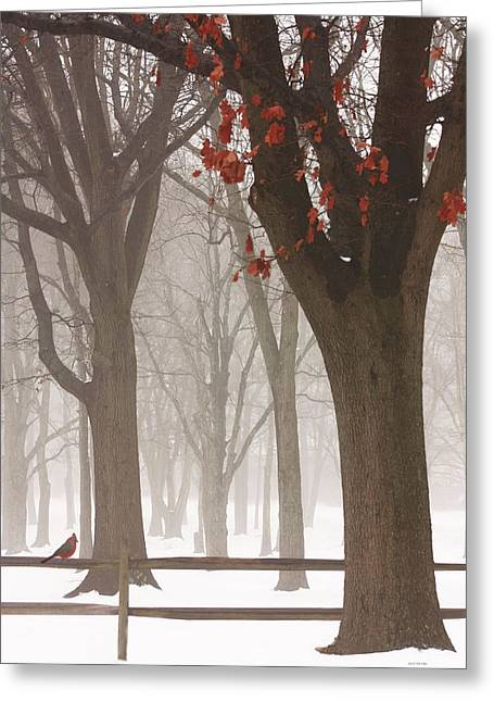 Snow Tree Prints Greeting Cards - Winter In The Woods Greeting Card by Tom York Images