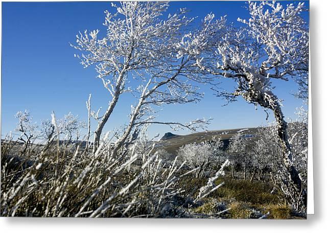 Winter landscape.  Auvergne. France Greeting Card by BERNARD JAUBERT