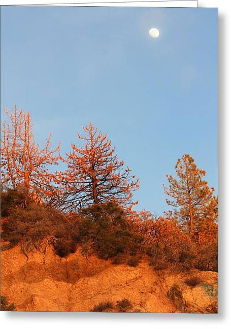Angeles Forest Greeting Cards - Winter Light Greeting Card by Sarah Vandenbusch