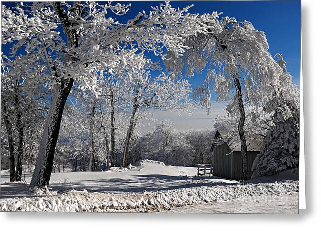 Blue Knob Greeting Cards - Winter Morning Greeting Card by Lois Bryan