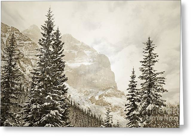 Canadian Winter Art Greeting Cards - Winter Mountain Pine Greeting Card by Andrea Hazel Ihlefeld