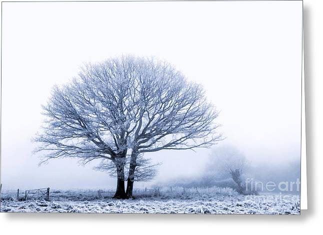 Winter Scenes Rural Scenes Greeting Cards - Winter oak  Greeting Card by Richard Thomas