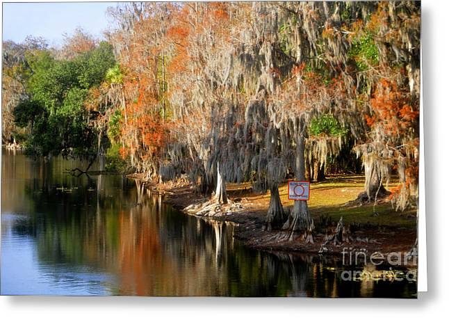 Florida Landscape Photography Greeting Cards - Winter on the Hillsborough Greeting Card by David Lee Thompson