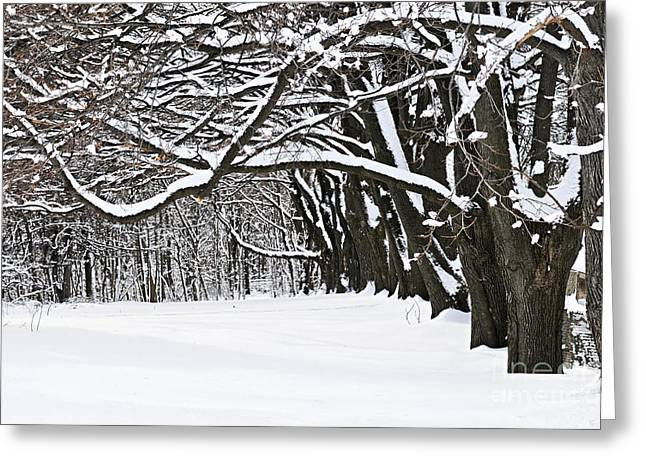 Snowy Tree Greeting Cards - Winter park with snow covered trees Greeting Card by Elena Elisseeva
