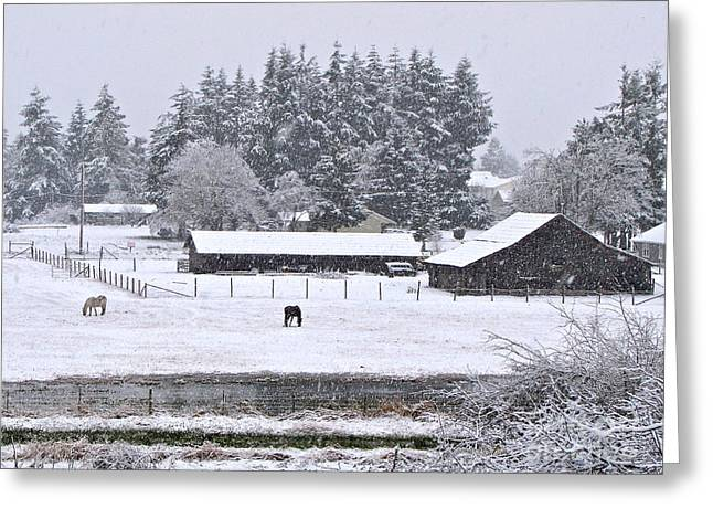 Sean Horse Greeting Cards - Winter Pasture Greeting Card by Sean Griffin
