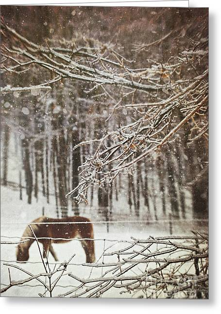 Grazing Snow Greeting Cards - Winter scene with horse grazing in wooded pasture Greeting Card by Sandra Cunningham