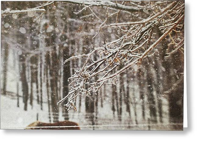 Winter scene with horse grazing in wooded pasture Greeting Card by Sandra Cunningham