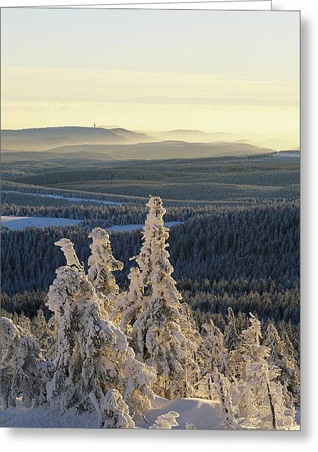 Park Scene Greeting Cards - Winter Scenic On Mountain Top Greeting Card by Norbert Rosing