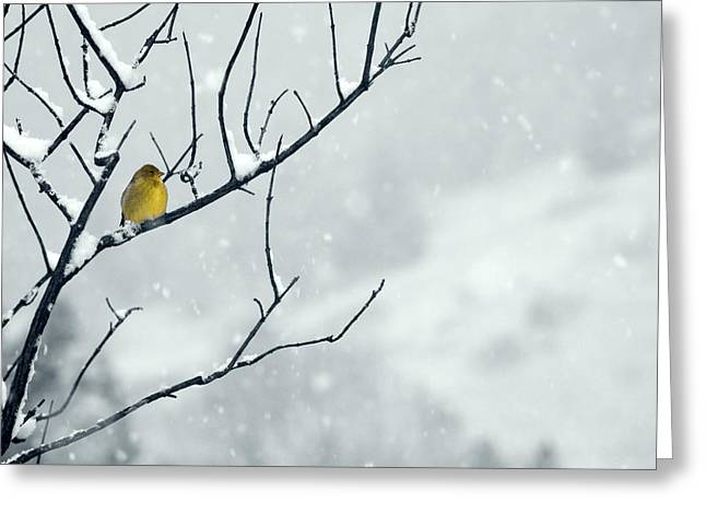Oregon Wild Life Greeting Cards - Winter Snow with a Touch of Goldfinch for Color Greeting Card by Laura Mountainspring
