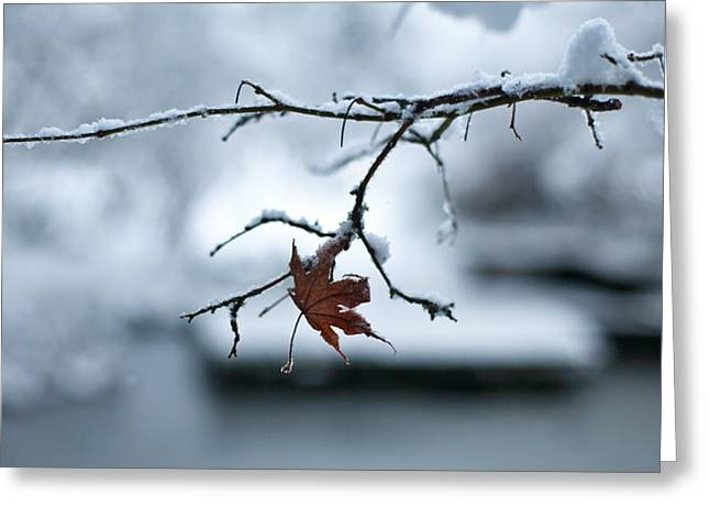 Winter Solo Greeting Card by Mike Reid